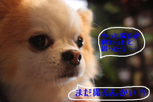 素晴らしき日本人!!_b0130018_1317842.jpg
