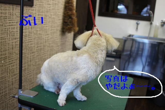 素晴らしき日本人!!_b0130018_1391218.jpg