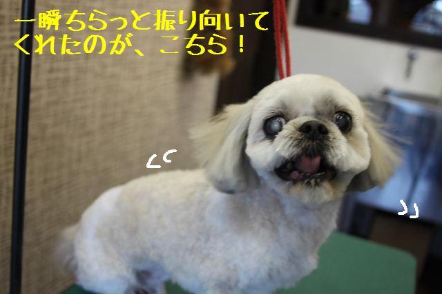 素晴らしき日本人!!_b0130018_139574.jpg