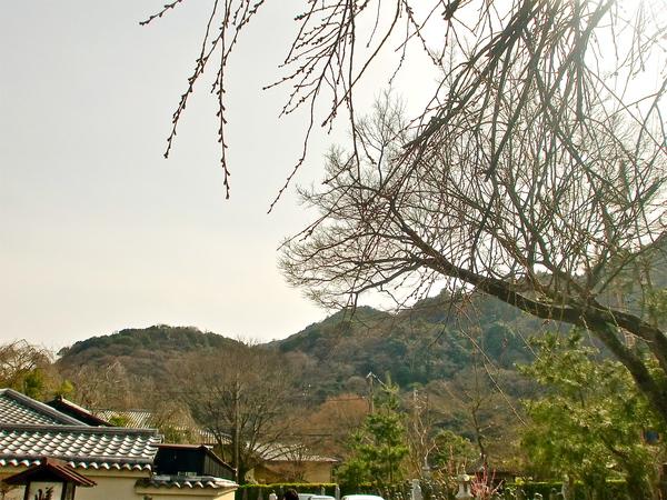 震災後_a0197730_0482214.jpg