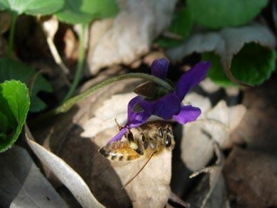 ミツバチも誘われて_e0097534_2011070.jpg