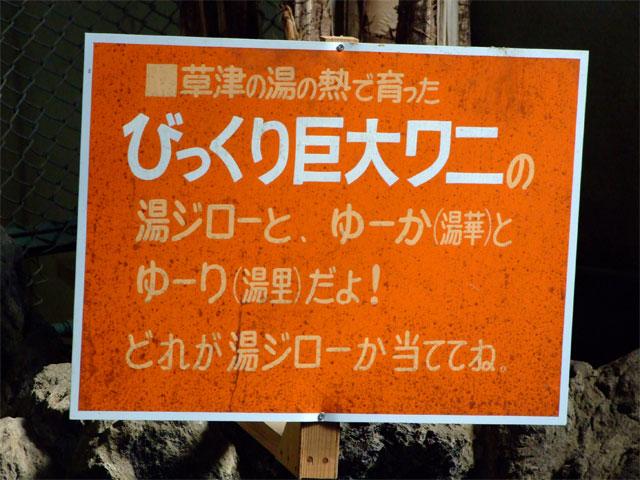 草津熱帯圏の「本気」 ←本気と書いてマジと読む_a0179837_2151542.jpg