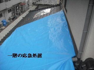 瓦の緊急・・・雨対策_f0031037_153050.jpg