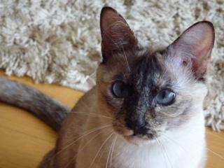 猫のお友だち カイリちゃん編。_a0143140_21293310.jpg