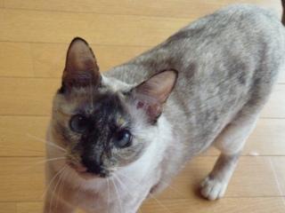猫のお友だち カイリちゃん編。_a0143140_21303345.jpg