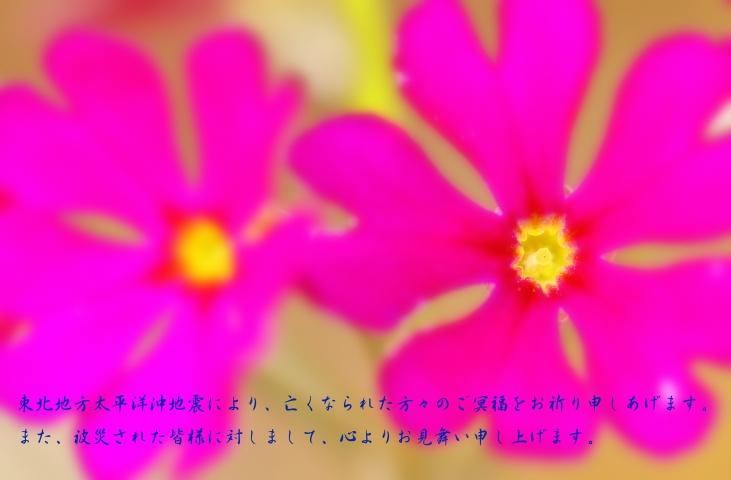 f0049152_036528.jpg