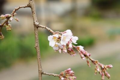 春彼岸です_a0133859_23184175.jpg