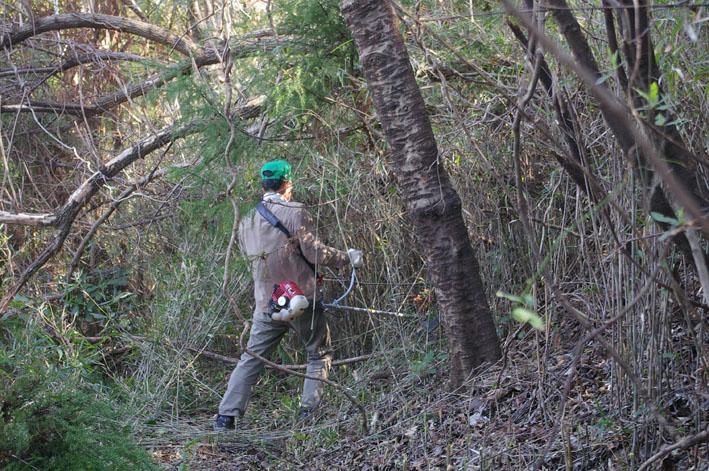 第3回六国見山森林公園の手入れに強力な助っ人登場!_c0014967_14324776.jpg