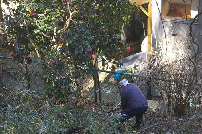 第3回六国見山森林公園の手入れに強力な助っ人登場!_c0014967_1436117.jpg