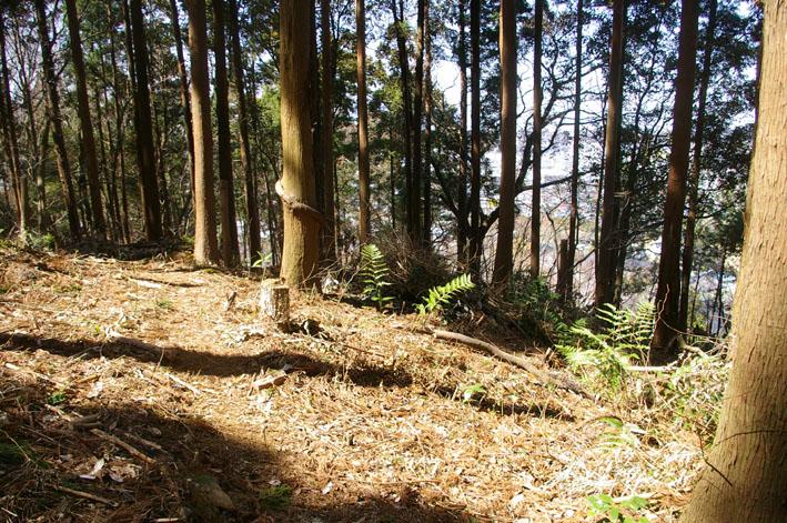第3回六国見山森林公園の手入れに強力な助っ人登場!_c0014967_14444225.jpg