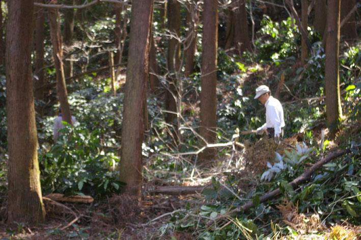 第3回六国見山森林公園の手入れに強力な助っ人登場!_c0014967_14531395.jpg