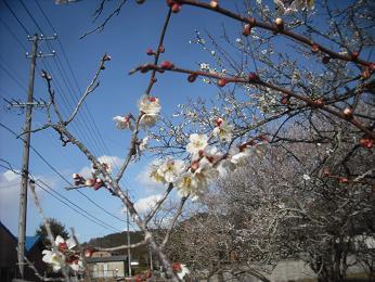 春_e0149215_11595275.jpg