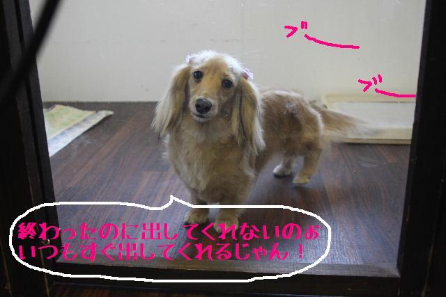 b0130018_17492037.jpg