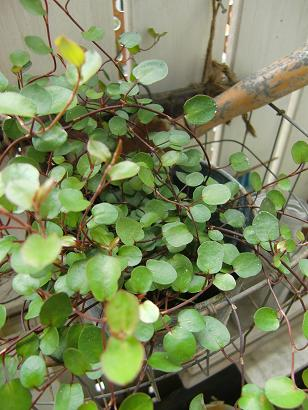 小さな鉢の春待ちの庭・・・_f0168730_10533623.jpg