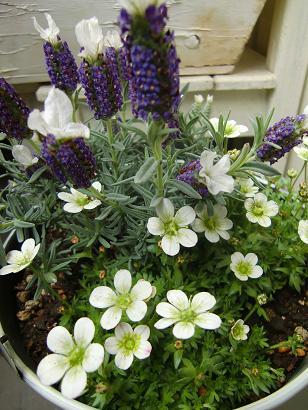 小さな鉢の春待ちの庭・・・_f0168730_10565498.jpg