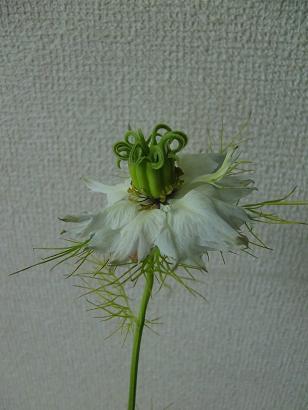 小さな鉢の春待ちの庭・・・_f0168730_1057476.jpg