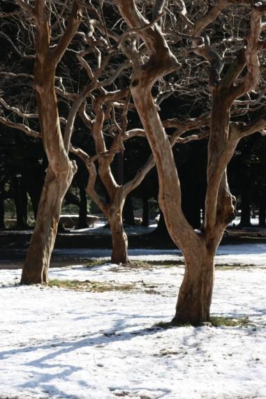 雪に踊る_f0055131_8281698.jpg