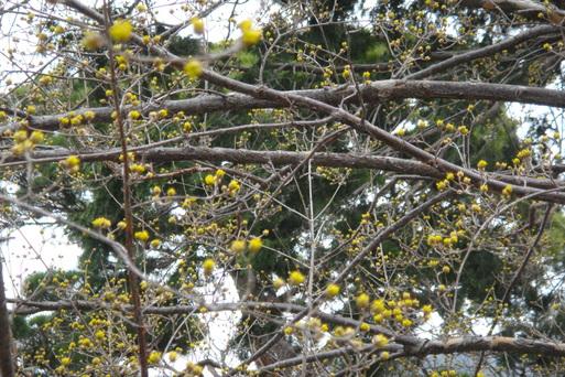 春です_e0226943_23542388.jpg