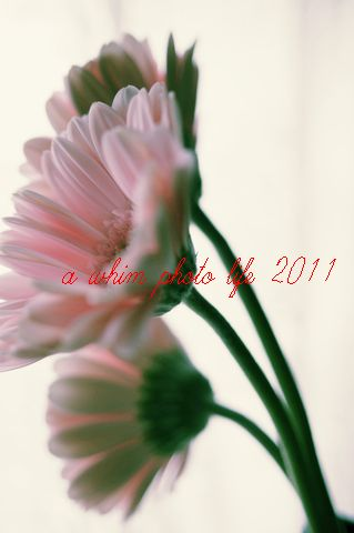 a0180146_201221.jpg