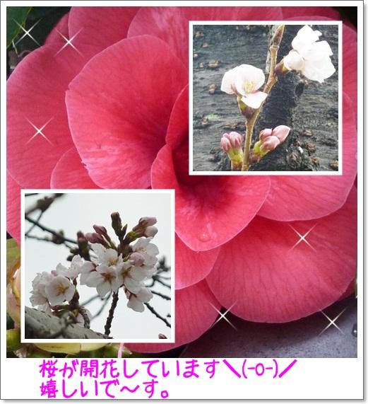 f0129949_2212126.jpg
