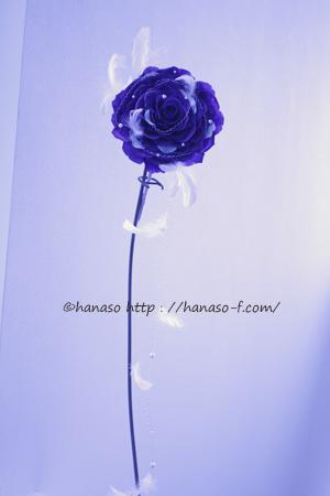 白いドレスに映えるブルーのメリア_c0198981_1123921.jpg