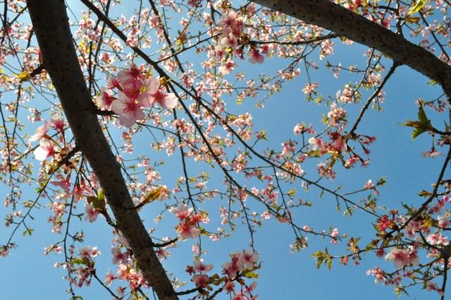 春の色、いろいろ。_a0126590_0382064.jpg