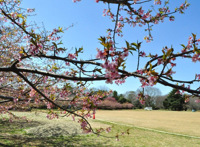 春の色、いろいろ。_a0126590_042218.jpg