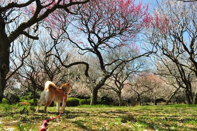 春の色、いろいろ。_a0126590_0454531.jpg