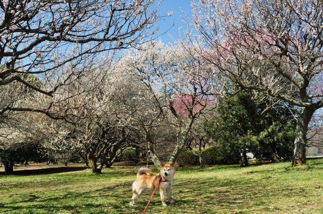 春の色、いろいろ。_a0126590_0471575.jpg