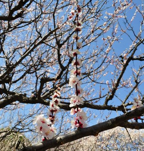 春の色、いろいろ。_a0126590_0503339.jpg