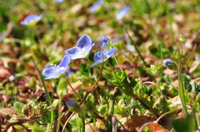 春の色、いろいろ。_a0126590_054142.jpg