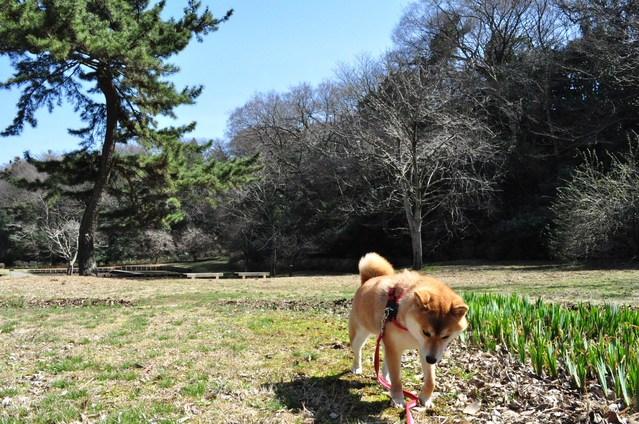 春の色、いろいろ。_a0126590_0583521.jpg
