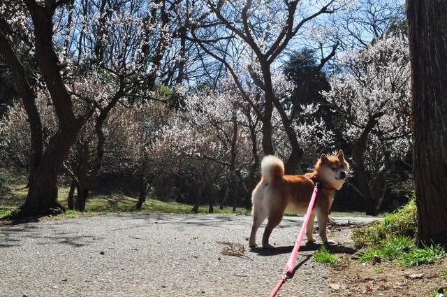 春の色、いろいろ。_a0126590_11941.jpg