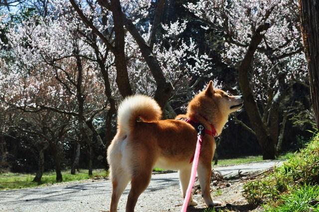 春の色、いろいろ。_a0126590_121934.jpg