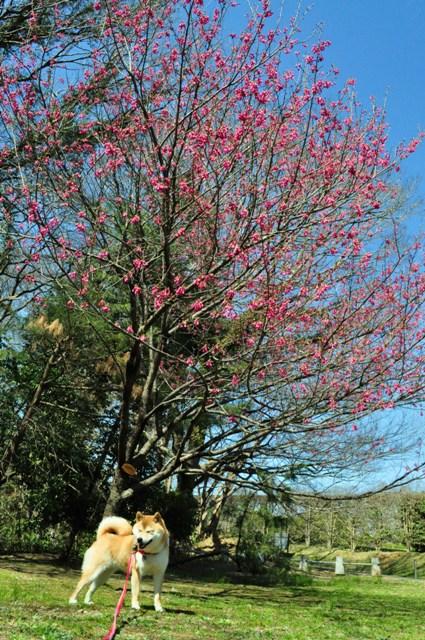 春の色、いろいろ。_a0126590_151886.jpg
