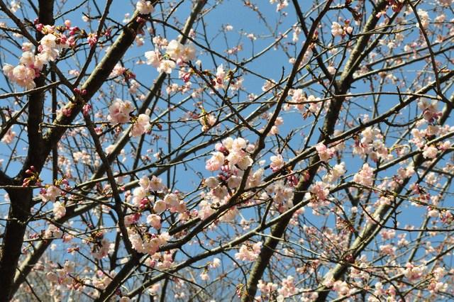 春の色、いろいろ。_a0126590_155935.jpg