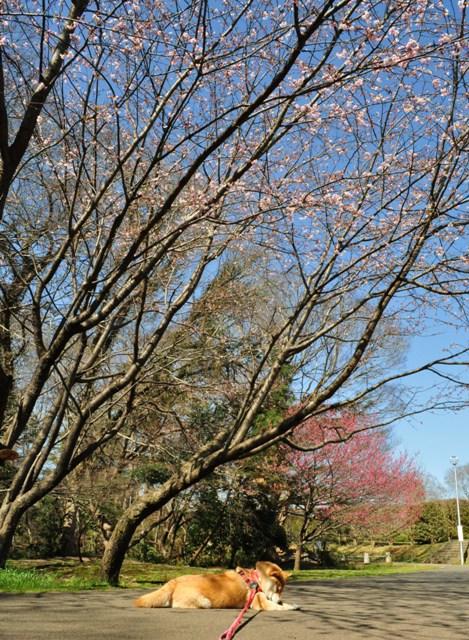 春の色、いろいろ。_a0126590_171776.jpg