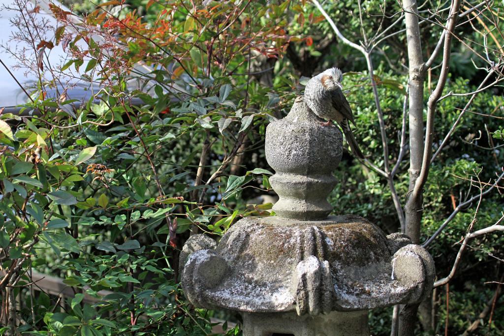 久しぶりに鳥にレンズを・・/重ねて画像を掲載_b0024798_7421445.jpg