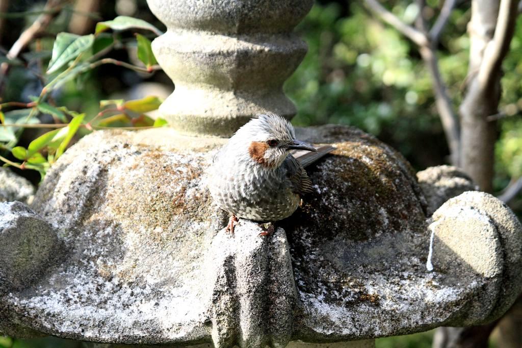 久しぶりに鳥にレンズを・・/重ねて画像を掲載_b0024798_7422290.jpg