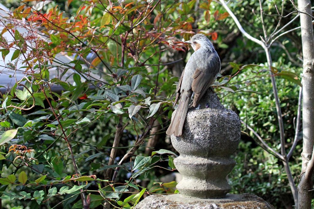 久しぶりに鳥にレンズを・・/重ねて画像を掲載_b0024798_7423198.jpg