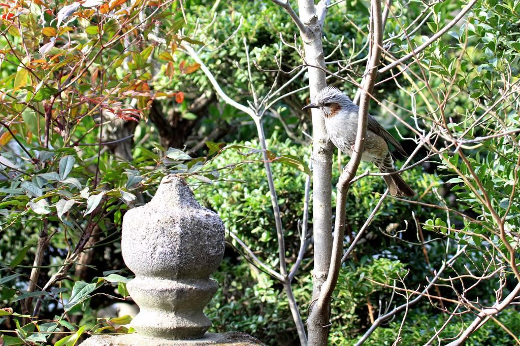 久しぶりに鳥にレンズを・・/重ねて画像を掲載_b0024798_742410.jpg