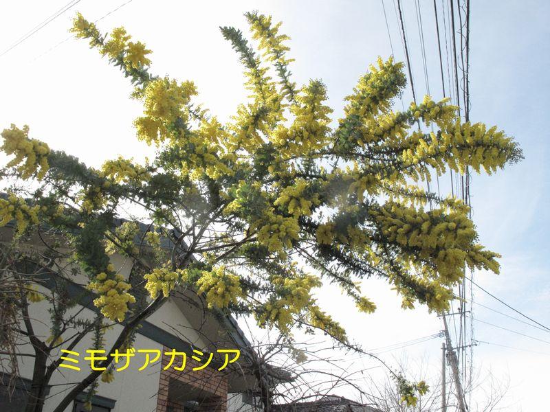 f0059498_1450384.jpg