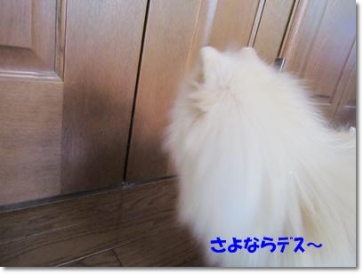 b0167519_911859.jpg