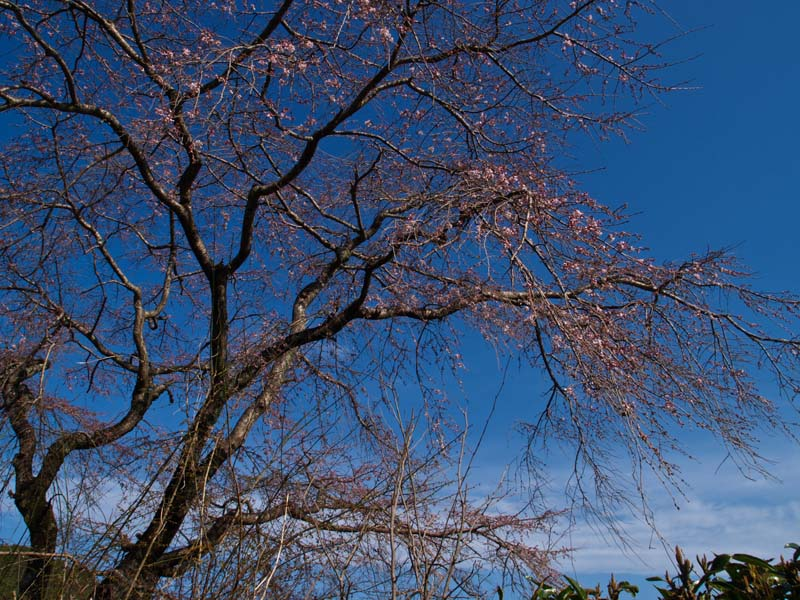 春めいてきました_d0127876_21521350.jpg