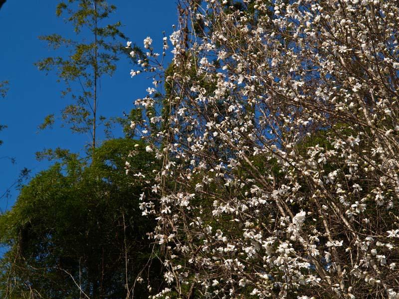 春めいてきました_d0127876_21522621.jpg