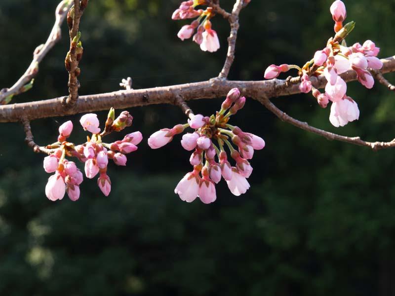 春めいてきました_d0127876_21523457.jpg