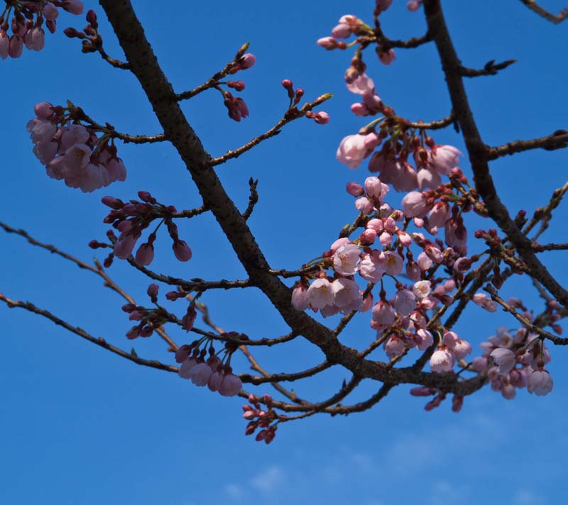 春めいてきました_d0127876_21523746.jpg