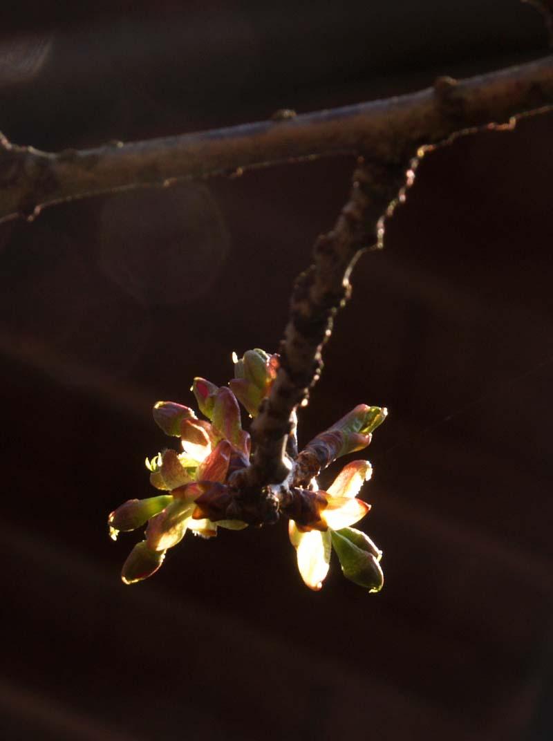 春めいてきました_d0127876_2152954.jpg