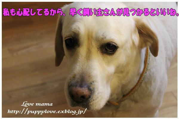 b0136683_21194811.jpg