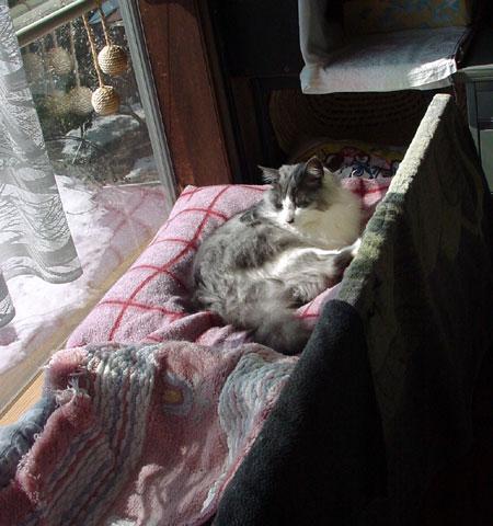 水苔の再生とミニシクラメンと猫・・・とりとめもなく・・^^_a0136293_17214658.jpg